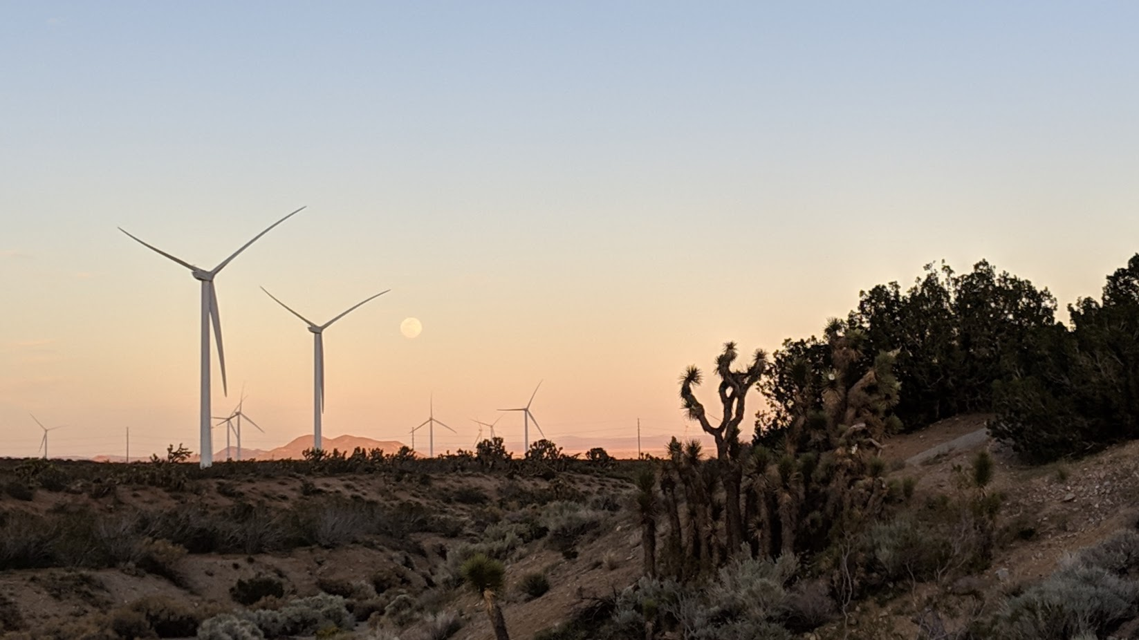 La lune, les éoliennes et les arbres Joshua • The moon, the wind mills and the Joshua trees