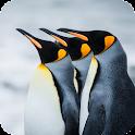 Penguin Live Wallpaper icon