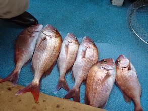 Photo: オガワさんの釣果。 シメたのも合わせて9匹の釣果でした。