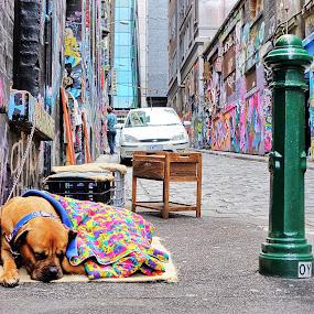 Street Art by Glen John Terry  - City,  Street & Park  Street Scenes ( street art,  )
