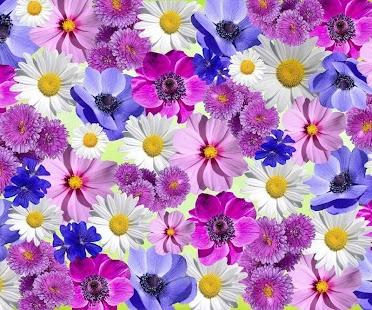 Daisy Flower Wallpaper - náhled