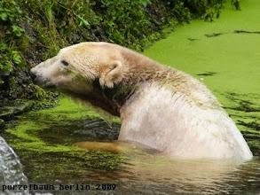 Photo: Knut schaut interessiert zurueck ;-)