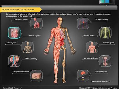 HumanAnatomy-Digestive – Apps bei Google Play