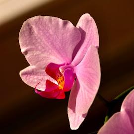 Orchid  by Alf Winnaess - Uncategorized All Uncategorized