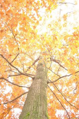 La danza dell'autunno di dederandi