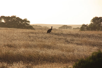 Photo: Year 2 Day 226 - Early Morning Kanga on the way to The Granites