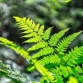 Green in the forrest by Dan Westtorp - Nature Up Close Other Natural Objects