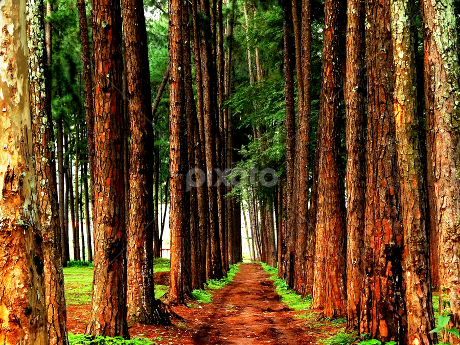 the path by Nani Garu - Nature Up Close Trees & Bushes ( clay, narrow, tree, path, tall )