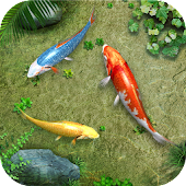 Water Koi Fish Pond LWP
