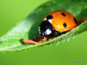Photo: Ladybug