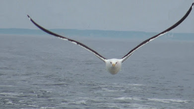 Photo: Летающий монстр