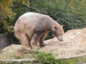 Photo: Sieht gut aus, findet Knut ;-)