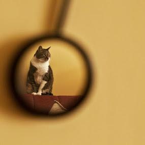 by Vesna Lavrnja - Animals - Cats Portraits