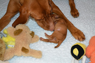 Photo: Back from the vet, Lila is making sure baby is ok and baby telling Mom all about the mean people.