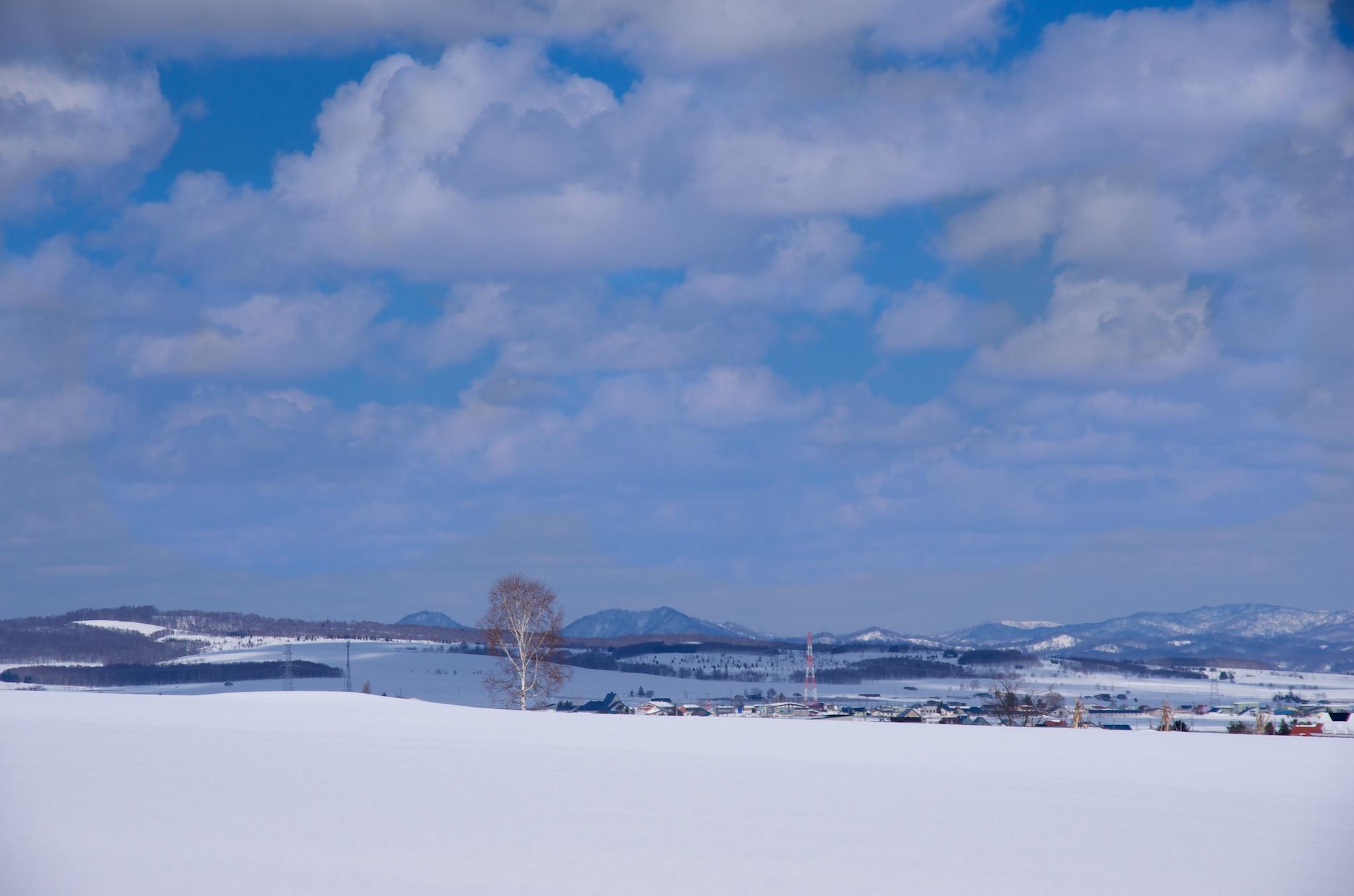 Photo: ひまわりの里(北海道北竜町)2014年3月17日