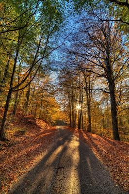 La strada attraverso il bosco di Marcello545