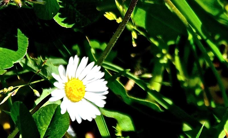 Primavera luminosa di FP66
