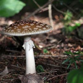 by Anny  An - Nature Up Close Mushrooms & Fungi