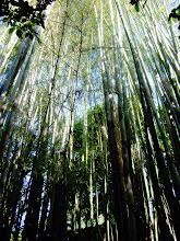 Photo: Bamboo  #grasstuesday Curated by +Ray Bilcliff@Marilou Aballe +Margaret Tompkins #thaituesday Curated by +Peak Ness:- I took this shot in my father-in-law's yard high up in the mountains of Omkoi, Northern Thailand.Bamboo is a group of perennial evergreens in the true grass family Poaceae. Giant bamboos are the largest members of the grass family and therefore are at home In the #grasstuesday category!  Photography by Justin Hill ©