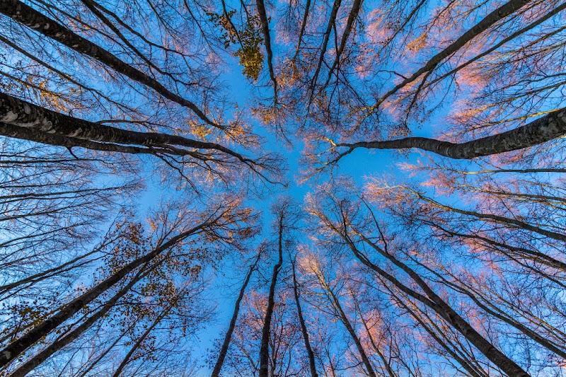 Autumn Trees di fedevphoto