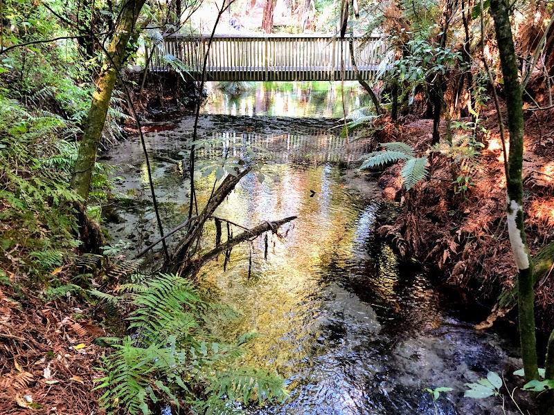 Rotorua 2020 (Hamurana Springs Nature Reserve)