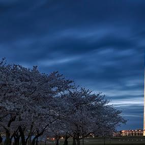 DC Blue by Robert Fawcett - Buildings & Architecture Statues & Monuments ( dc, washington, dawn, blue, monument, places, travel, spring )
