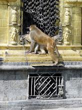 Photo: Nennt man auch den Affentempel.