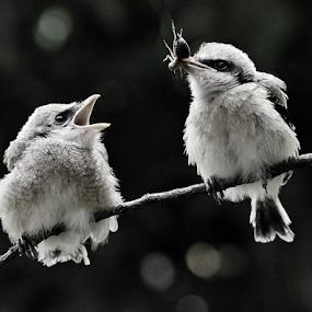 Feeding time 2 by Sigit Purnomo - Black & White Animals