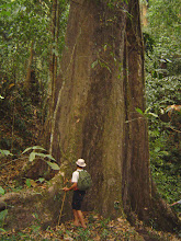 Photo: Tree in Nam Ha NPA on Ban Nalan Trial-2 Days Trek Ban Nalan Trail -Trekking in Luang Namtha, Laos