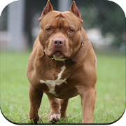Pitbull Dog Wallpaper 4K