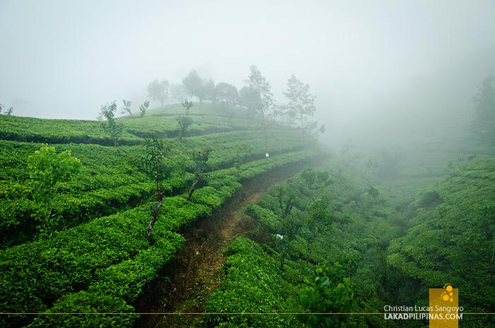 Ella to Colombo Train Tea Plantations