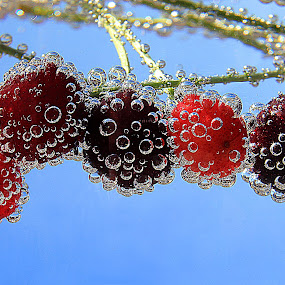 Cherries by Besnik Hamiti - Food & Drink Fruits & Vegetables ( bubbles, cherries )