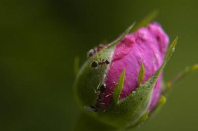 Anche le formiche nel loro piccolo.. di andreamazza