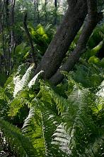 Photo: in dad's woods