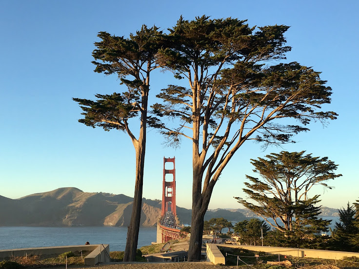 Golden Gate Bridge with the full Cyprus trees in the frame.