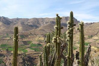 Photo: Cactaceas subiendo a Soncoquilla Huanca / 18 y 19 de Noviembre (2012) Caylloma