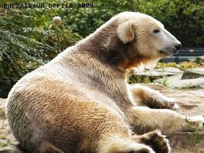 Photo: Knut hat sich ein ruhiges Plaetzchen gesucht ;-)