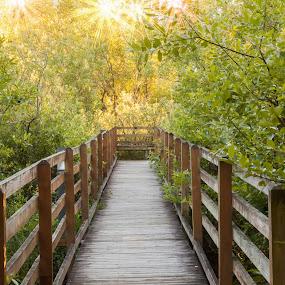 The Bridge Beckons by Judy Wright Lott - Buildings & Architecture Bridges & Suspended Structures ( ponds, peaceful, bellingham, nature, bridge, woods, wooden bridge )