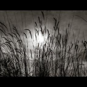 dependable by Danial Abdullah - Landscapes Prairies, Meadows & Fields