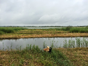 Photo: Leo and Monty on walk near Hickling broad
