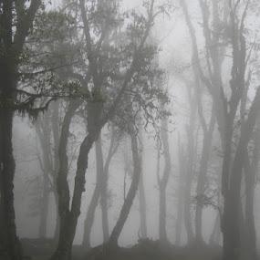 Fog by Shishir Desai - Landscapes Weather ( pwcfoulweather, path, nature, landscape,  )
