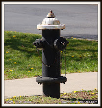 """Photo: Day 007 of 365 04-09-2012 - Monday A """"black and white"""" fire hydrant ????"""