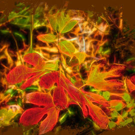Fall Splendor, by Dave Walters - Digital Art Places ( fall, blue ridge parkway, canon rebel, colors, digital art )
