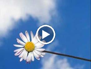 Video: Antonio Vivaldi  Concerto for 2 clarinets, 2 oboes, strings   b.c. in C major (RV 559) - I. II. -