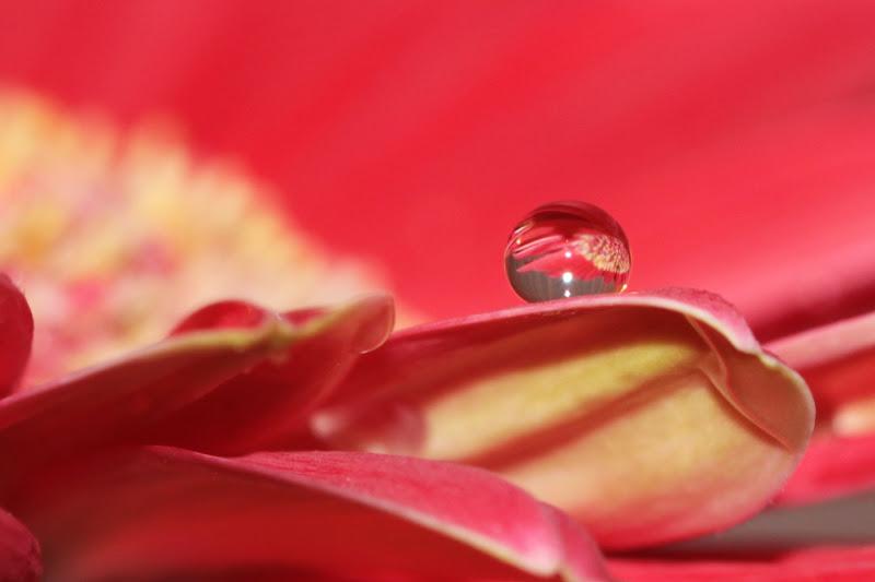 Di riflesso...un fiore di El Sunrise