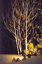 Photo: Uplighting makes trees stand out and enhances the bark.