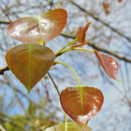 Autumn Gold in May? by Eloise Rawling - Nature Up Close Leaves & Grasses ( autumnal, autumn colors, leaves,  )