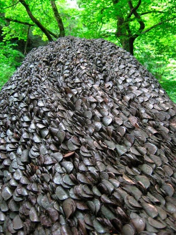 Wish Tree, árvores do dinheiro do Reino Unido