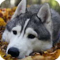 Malamute Dog Pack 2 LWP icon