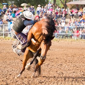 Bronc riding by Scott Thomas - Sports & Fitness Rodeo/Bull Riding ( horse, cowboy, fall, riding, rodeo )